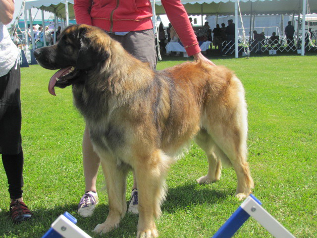 National Dog Show Reserve Best In Show
